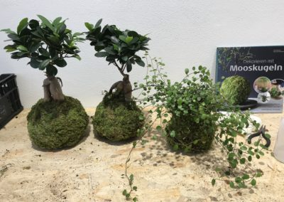 Workshop di Kokedama da Dotroom MILANO