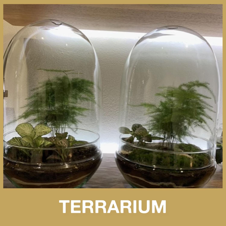 terrarium idea regalo natalizia da dot room milano